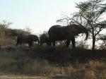 Africa do Sul - Kruger