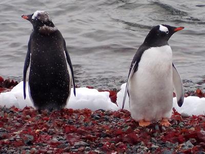 Antartida - Frente e verso